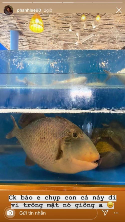 Phanh Lee cũng rất thích đùa, dìm chồng bằng cách chụp ảnh một chú cá cùng dòng chú thích: Chồng bảo em chụp con cá này đi vì trông mặt nó giống anh.