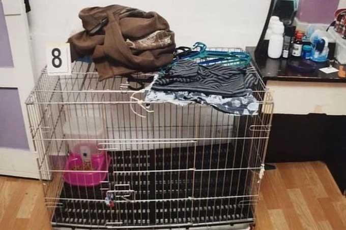 Bé trai bị bố mẹ nhốt trong chuồng mèo. Ảnh: Singapore High Court.