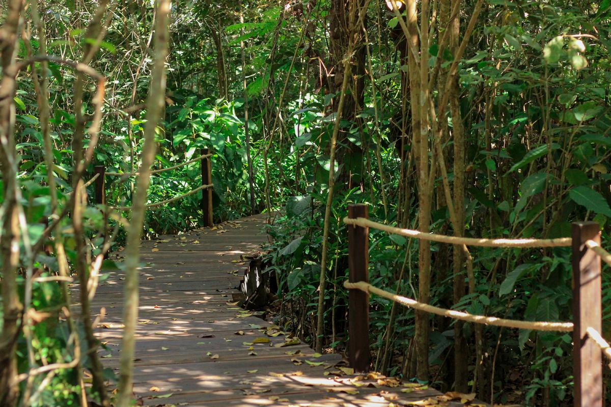 Sau trải nghiệm tắm khoáng, du khách có thể vui chơi tại khu vực Minera Forest. Minera Forest là tổ hợp rừng nhiệt đới, các vườn cây trái và cánh đồng hoa đủ loại, nơi sinh sống của các loài thực vật tự nhiên nên không khí và cảnh quan thuần khiết, trong lành. Đây cũng là không gian cho những hoạt động yoga, thiền, vẽ tranh và những chuyến cắm trại cùng bạn bè, người thân hay những hoạt động team bulding cho các du khách đi theo đoàn.