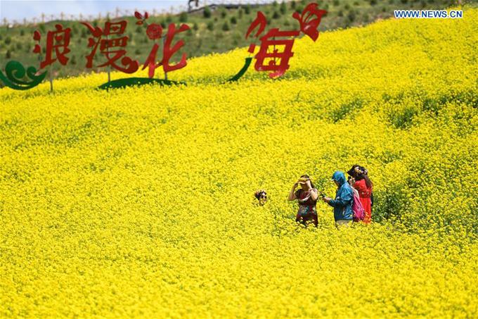 Đồng hoa cải lớn bậc nhất Trung Quốc đón khách lác đác - 2