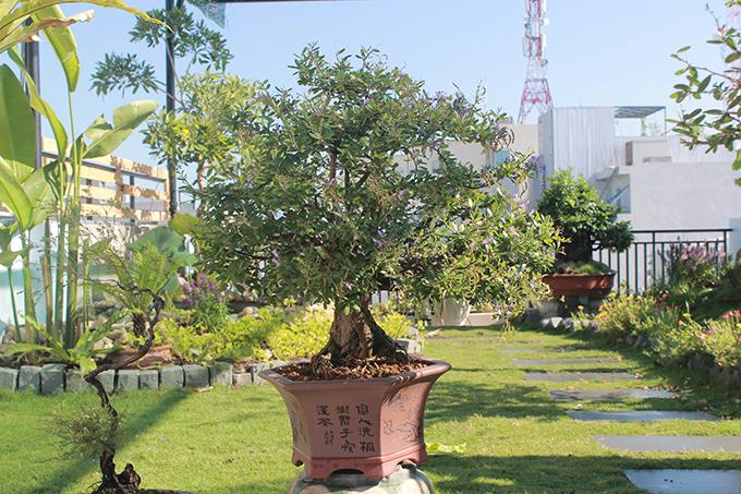 Vợ chồng anh Bảo cũng chú ý khi chọn cây cảnh, hoa lá cho vườn sân thượng, ưu tiên cây có sức sống tốt, có tác dụng thanh lọc không khí, không gây nguy hiểm cho các bé.