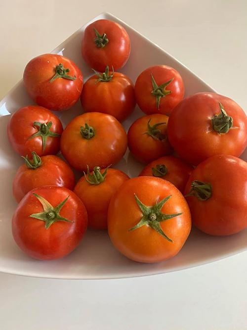 Cà chua nhà trồng của Thanh Thảo có màu cam đỏ đẹp mắt, nặng tay.