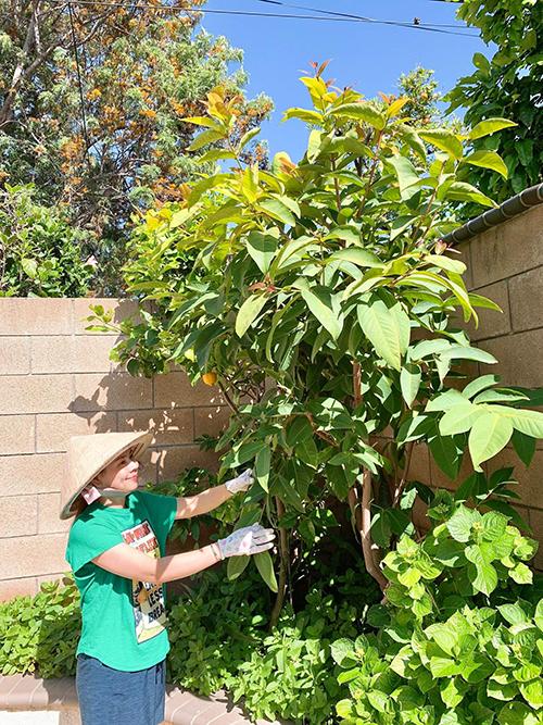 Thanh Thảo cho biết khu vườn nhà chị được mẹ gây trồng từ khi sang California, Mỹ, tới khi bà về lại Việt Nam, chị là người tiếp quản, chăm sóc. Vườn được quy hoạch ở cả sân trước và sân sau nhà. Mỗi ngày, Thanh Thảo đều dành thời gian để chăm vườn, đặc biệt là trong bối cảnh giãn cách xã hội vì Covid-19 tại Mỹ.