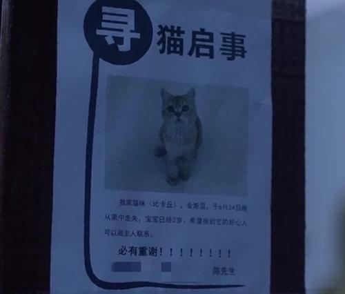 Trong cảnh phim Trần Dữ đi tìm mèo cho vợ, anh có ghi số điện thoại liên lạc trên tờ thông báo. Khi dân mạng tra thử số điện thoại này, thông tin hiện ra là tên của Lâm Hữu Hữu.