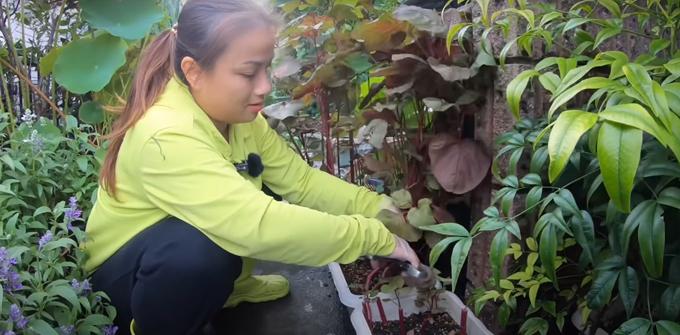 Quỳnh Trần trồng cả rau dền đỏ và cắt xéo gốc để rau không mọc thêm do trái mùa sinh trưởng.
