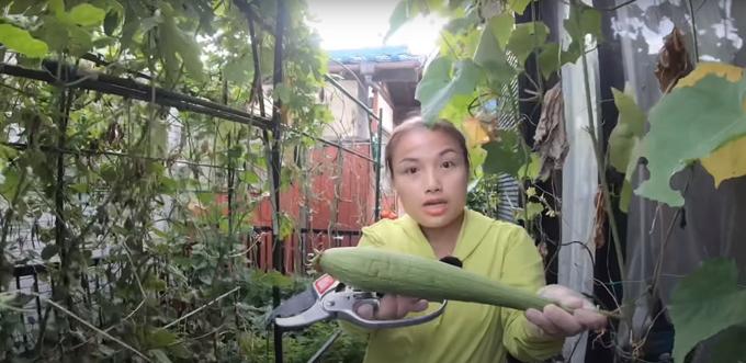 Vườn tầng 1 của nhà Quỳnh Trần được quy hoạch với nhiều khay, chậu và các giàn cho cây dây leo.