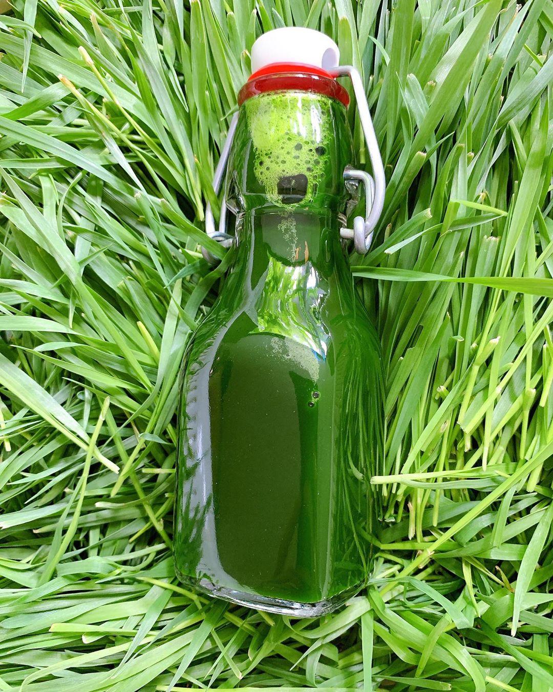 Nước ép cỏ lúa mì có tác dụng ngăn ngừa lão hóa, thnah lọc cơ thể, có lợi cho vóc dáng, làn da.