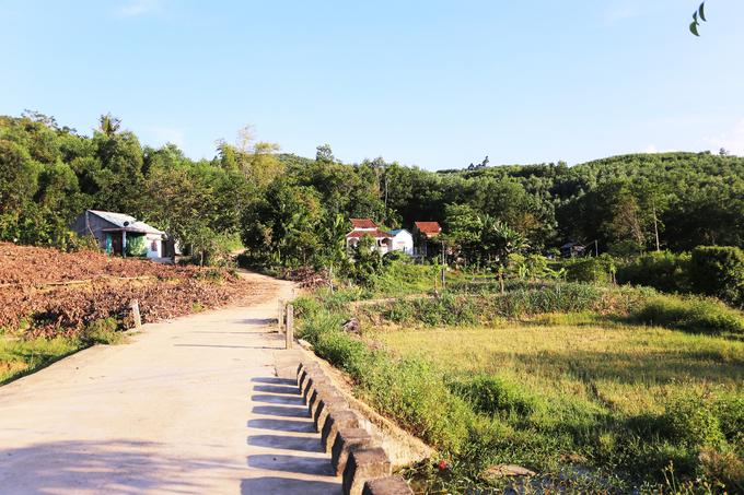 Mùa dâu đất chín đỏ ở Quảng Nam