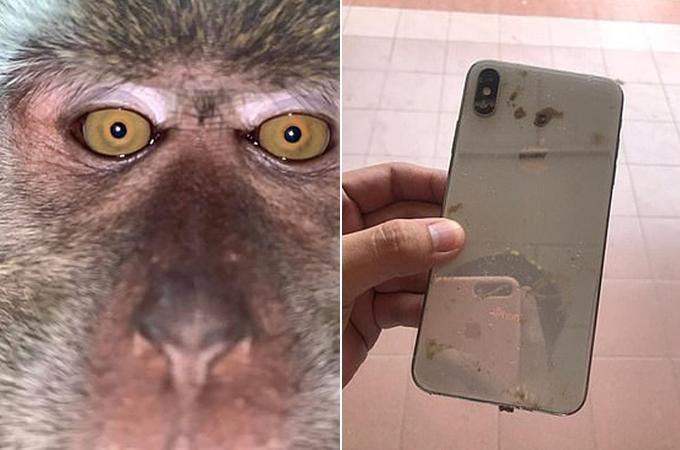 Chiếc điện thoại chứa loạt ảnh selfie của con khỉ sau khi được Rodzi tìm thấy ở khu rừng sau nhà. Ảnh: Facebook.