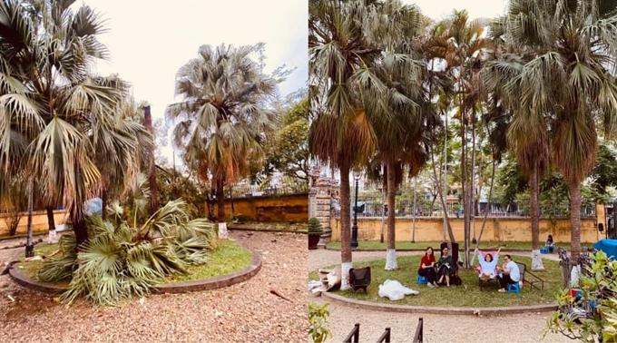 Một số cây lớn nơi các diễn viên hay ngồi nghỉ bị bão làm đổ.