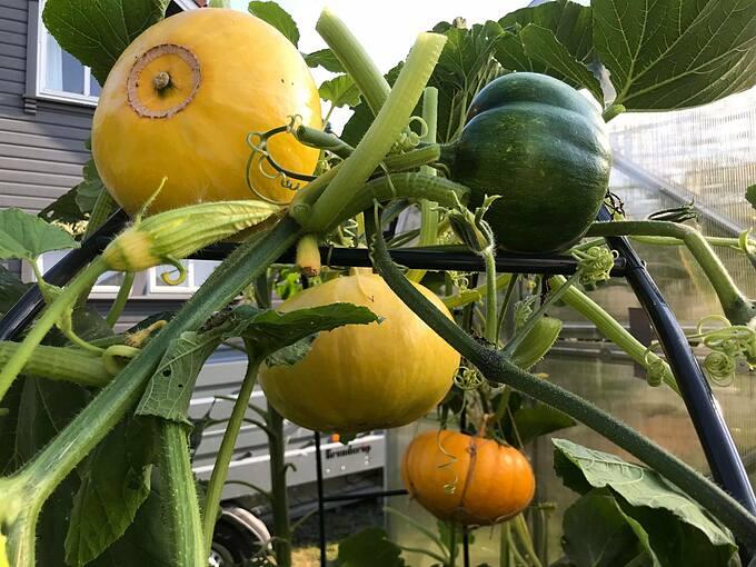 Dennis lựa chọn phương pháp canh tác hữu cơ vì nó thân thiện với môi trường. Tổng diện tích khu vườn hiện tại mà chàng trai này sở hữu lên đến 600 m2. Anh trồng cây ăn quả, rau, thảo mộc... Những điều hiện tại với Dennis giống như một giấc mơ đã thực sự thành hiện thực.