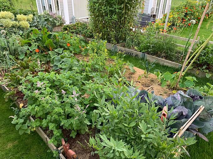 Khi làm vườn, Dennis cho rằng, phương pháp tốt nhất để chống côn trùng là không sử dụng hóa chất. Anh sẽ loại bỏ những kẻ gây hại bằng tay hoặc kéo, hoặc dùng vòi nước để xịt bay côn trùng nhỏ.