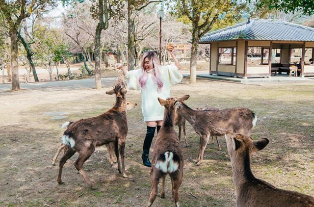 Có vẻ như đại dịch coronavirus đang ảnh hưởng không chỉ đến cuộc sống của con người mà còn ảnh hưởng đến cuộc sống của những chú hươu ở Công viên Nara. Coronavirus đang ảnh hưởng đến sức khỏe của đàn hươu Nhật Bản tại Công viên Nara.Thành phố Nara ở tỉnh Nara nổi tiếng với đàn hươu tự do thả rông, chúng được biết đến là băng qua đường dành cho người đi bộ và cúi chào khách du lịch ở Công viên Nara để đổi lấy bánh gạo senbei.