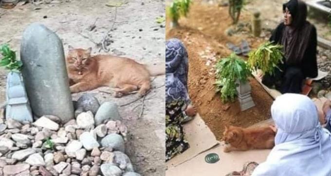 Con mèo Nana phủ nhục bên mộ của chủ vào mỗi sáng. Ảnh: FB.