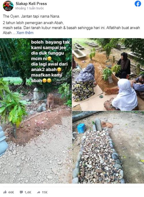 Chia sẻ về con mèo Nana thăm mộ chủ suốt 2 năm nhận được hàng chục nghìn lượt thích và chia sẻ. Ảnh: FB.