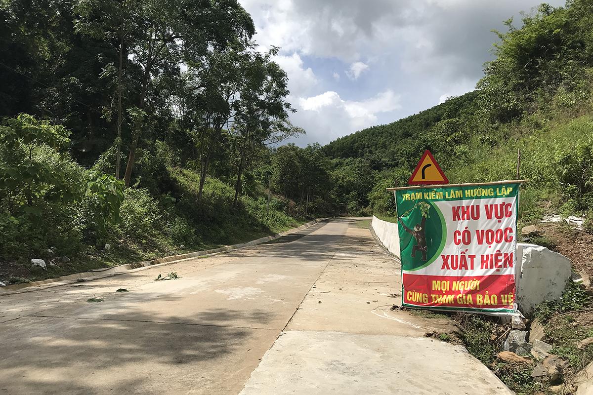 Nhà chức trách Quảng Trị căng lưới cao 10m ở hai bên đường Hồ Chí Minh nhánh Tây, nhằm ngăn đàn voọc xuống đường cắn người. Ảnh: Hà Thương