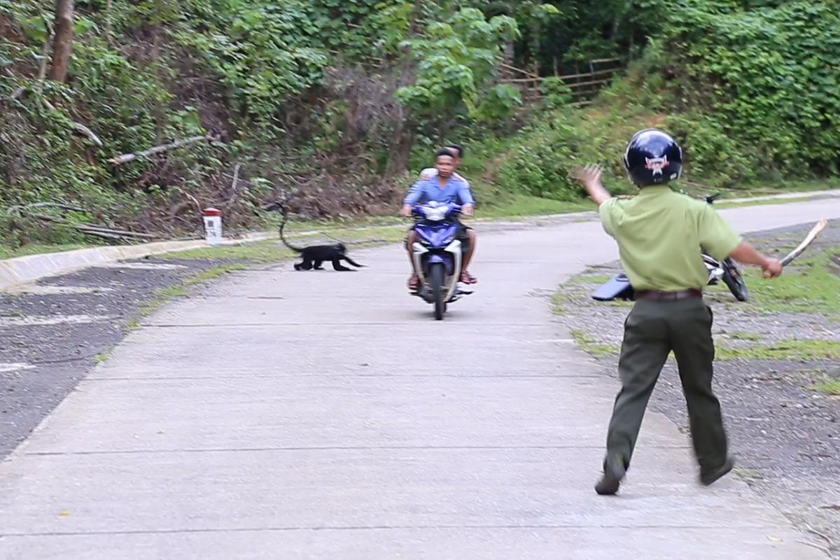 Một con voọc lao ra đường tấn công hai người đi xe máy. Ảnh: Hà Thương