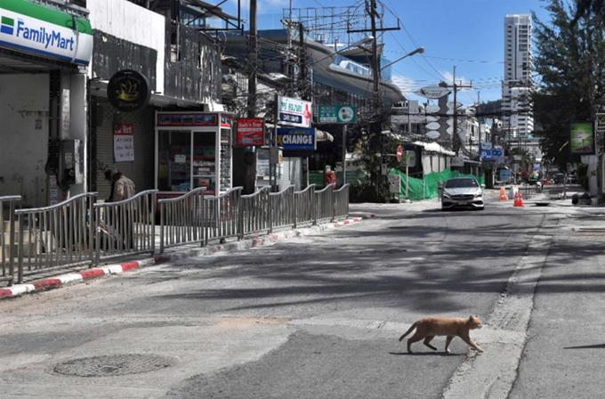 Con phố đổi tiền ở Phuket dường như đóng băng vì không ai có nhu cầu. Một chú mèo tự tin băng qua đường vì không có người và xe qua lại.