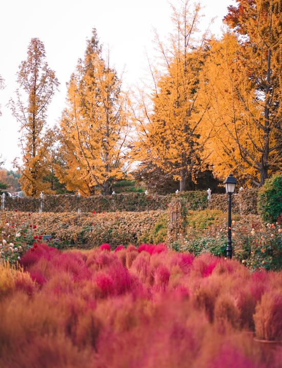 Nếu không hứng thú với những khu trò chơi đông đúc, cần phải xếp hàng cả tiếng thì bạn có thể chiêm ngưỡng vẻ đẹp của khu vườn cỏ hồng và rừng cây lá vàng, lá đỏ nằm kế khu châu Âu của công viên. Địa điểm này lý tưởng cho ai thích đi du lịch gia đình, đặc biệt là những gia đình có trẻ nhỏ.