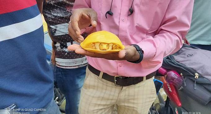 Con rùa thuộc loài rùa mai Ấn Độ. Ảnh: Twitter.