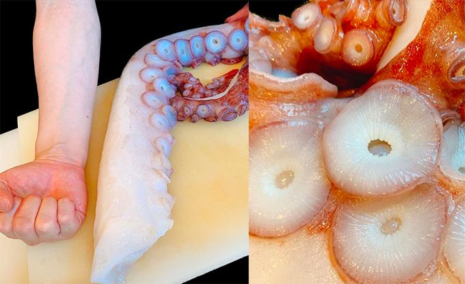 Không chỉ có các set ăn kinh điển, nhà hàng còn phục vụ nhiều món lạ độc theo mùa. Trong ảnh là một phần râu bạch tuộc Mizudako có kích thước khổng lồ, lớn hơn cả cánh tay của đầu bếp.