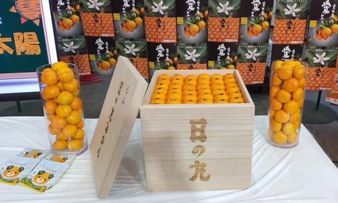 Thùng quýt hồng satsuma giá 9.600 USD tại phiên đấu giá ở chợ Ota, Tokyo, Nhật Bản hôm 5/11. Ảnh: JA Nishiuwa.