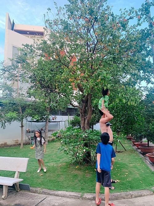 Ốc Thanh Vân khoe cây khế trong vườn nhà sai trĩu quả. Trong ảnh, chồng cô đang cõng các con để thu hoạch.