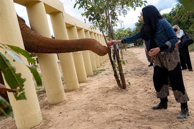Cher cho Kaavan ăn tại khu bảo tồn động vật hoang dã ở Campuchia hôm thứ tư.