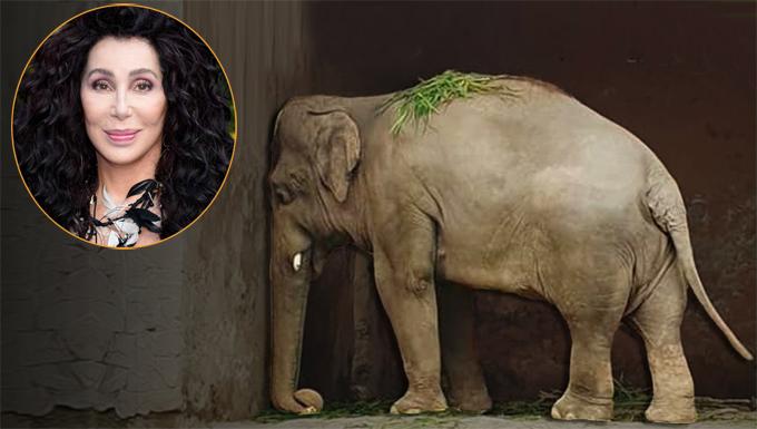 Cher xúc động khi biết được câu chuyện về Kaavan.