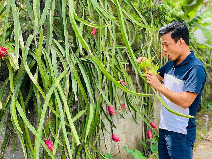 Hồng Đăng dành nhiều tâm huyết cho nhà vườn rộng hơn 1.000 mét vuông ở ngoại ô.