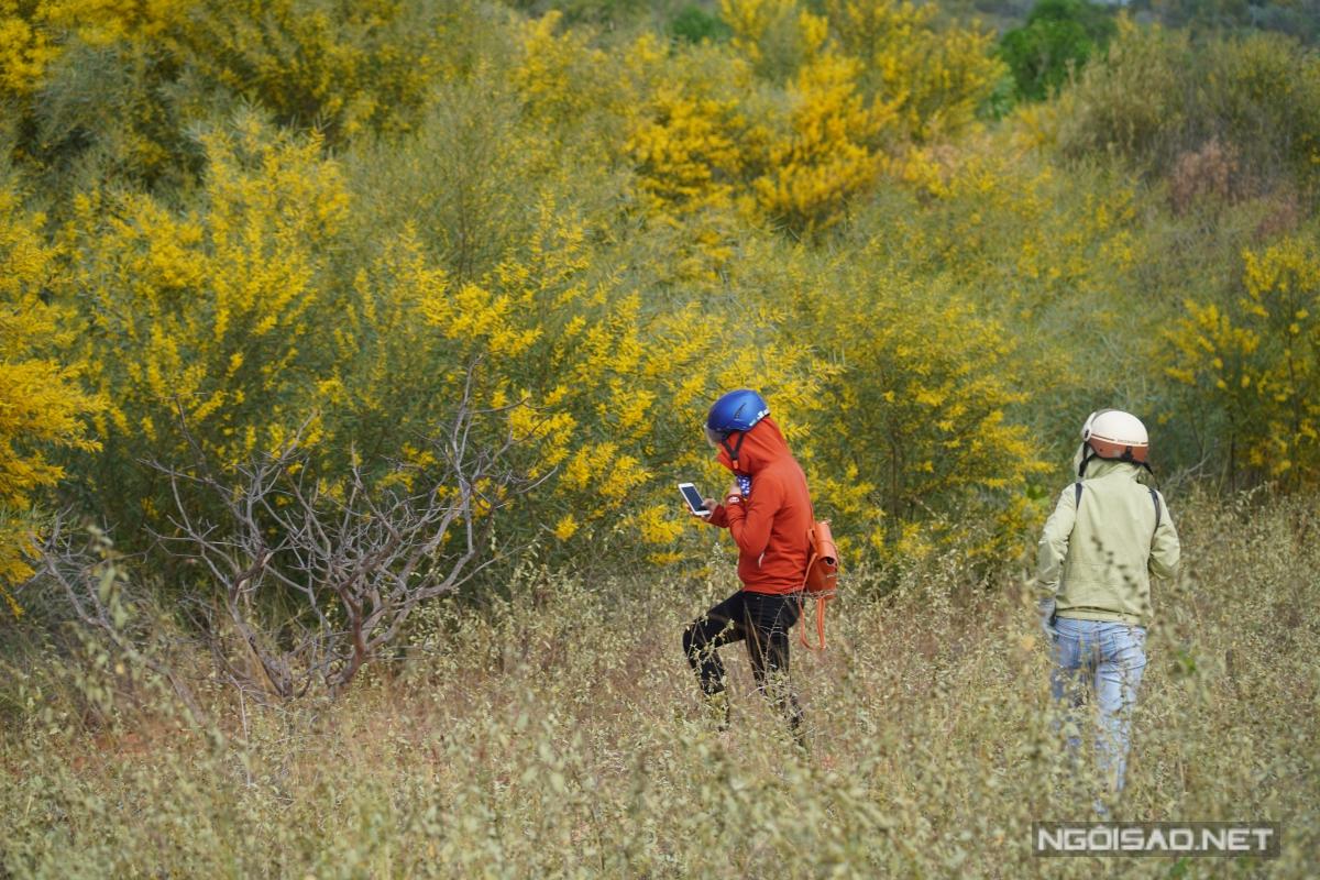 Địa chỉ cuối tuần: Mùa keo lá tràm Phan Thiết đẹp như tranh - 10