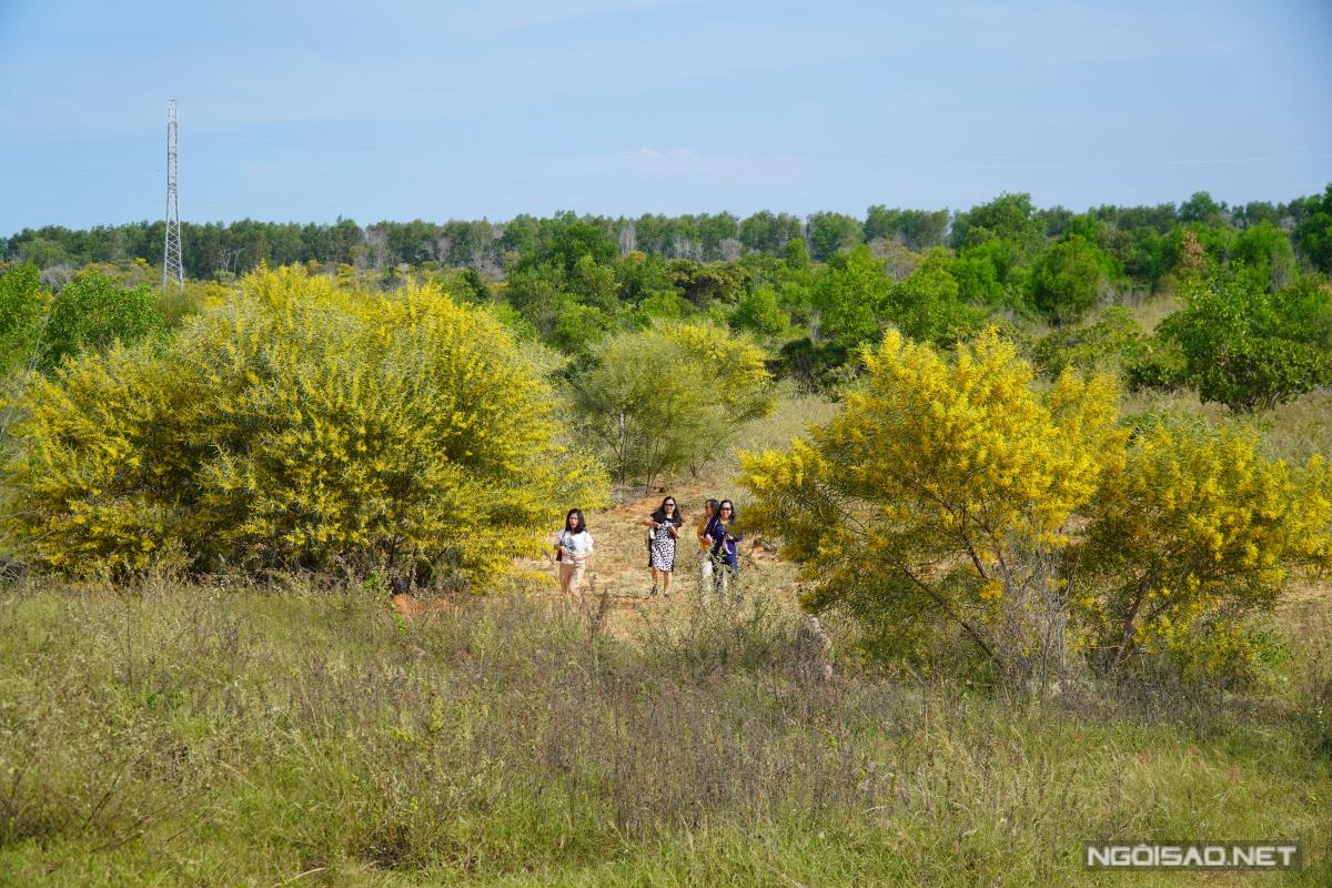 Địa chỉ cuối tuần: Mùa keo lá tràm Phan Thiết đẹp như tranh - 12