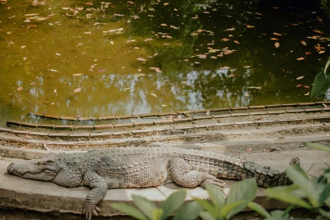 Không chỉ nuôi các loài vật trên cạn, Thảo Cầm Viên còn có một số loài động vật sống cả dưới nước và trên cạn như cá sấu. Công viên mở cửa đón khách từ 7h30 đến 17h30 mỗi ngày.
