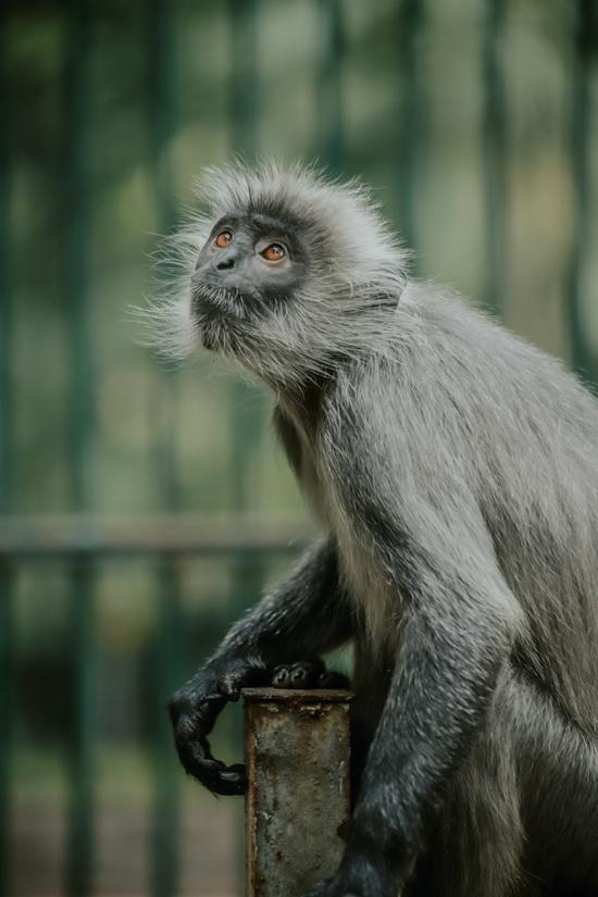 Từ lâu, Thảo Cầm Viên được ví như lá phổi xanh của Sài Gòn bụi bặm, nơi có không khí trong lành, nhiều cây xanh và nhiều loại động vật, chim chóc sinh sống trong khung cảnh bình yên.