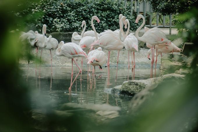 Thảo Cầm Viên được xây dựng từ năm 1869, qua 150 năm vận hàng, công viên vẫn là điểm đến phù hợp cho các mục đích hóng mát, tham quan, ngắm thú. Đây là ngôi nhà của hơn 1.300 động vật thuộc 125 loài, hơn 2.500 cây xanh với hơn 900 loài thực vật.