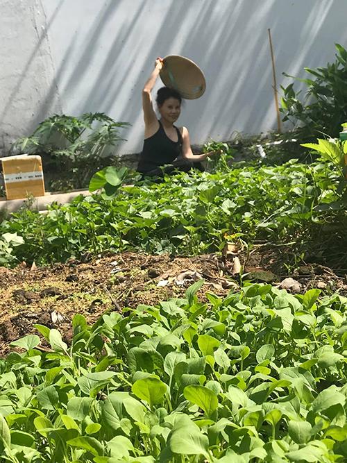 Ngoài bí, bà Ngọc Hương còn trồng nhiều loại rau ngắn ngày khác như rau cải, rau khoai lang, rau muống...