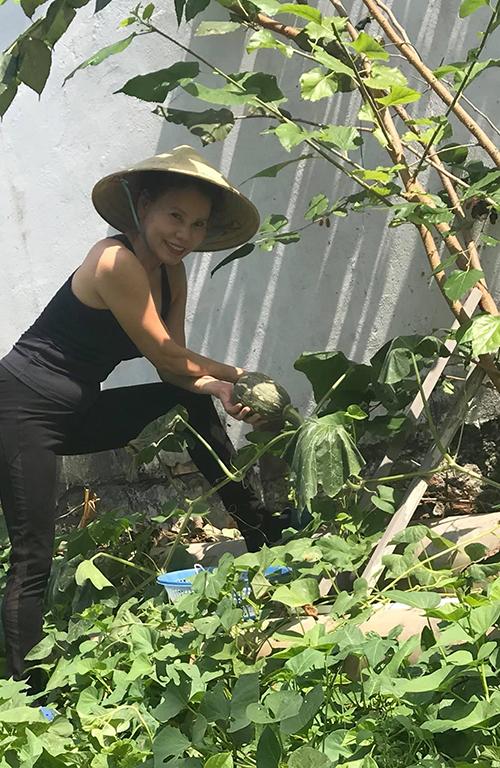 Bà Ngọc Hương - mẹ Hồ Ngọc Hà đã trồng cây, chăm vườn được nhiều năm nay. Làm vườn với bà không chỉ để đảm bảo nguồn thực phẩm sạch, chăm lo sức khỏe của người thân trong gia đình mà còn là cách để cân bằng cuộc sống, tìm những phút giây thư giãn.