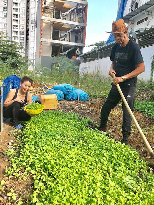 Bố mẹ Hồ Ngọc Hà làm vườn thành thục. Số lượng rau nhiều để đáp ứng nhu cầu của gia đình có 4 người lớn, 1 trẻ nhỏ.
