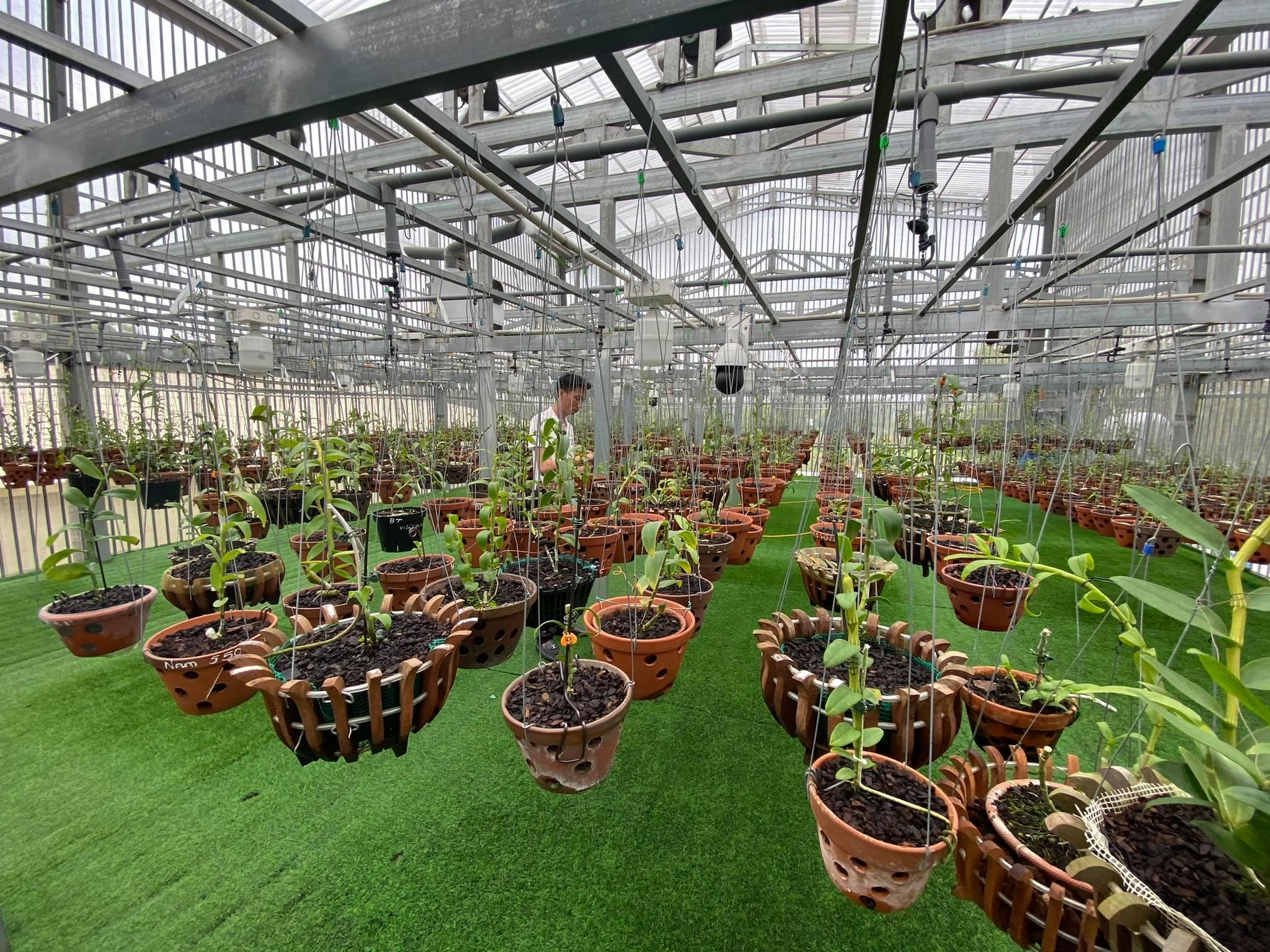Vườn lan với hơn 50 loài của anh Lê Bảo Trân.