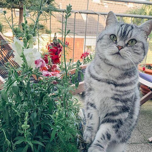 Sau mỗi vụ, Debbie đều trộn lại đất từ các chậu trồng và bắt đầu đợt gieo trồng mới vào mùa xuân. Phần lớn hạt giống được cô mua từ cửa hàng hạt giống hữu cơ trên mạng và thu thập từ cây trồng trong chính vườn nhà mình.