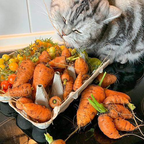 Ngay từ vụ mùa đầu tiên, cô đã bội thu cà chua. Sau đó, mỗi năm cô đều trồng củ cải, xà lách, dưa chuột... là những thực phẩm quen thuộc trong bữa ăn hàng ngày.