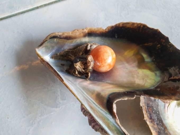 Viên ngọc trai Melo màu cam được tìm thấy trong vỏ hàu được định giá khoảng 10 triệu Baht Thái. Ảnh: Viral Press.