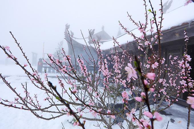 Đỉnh Fansipan chìm trong tuyết trắng dày 60 cm - 18