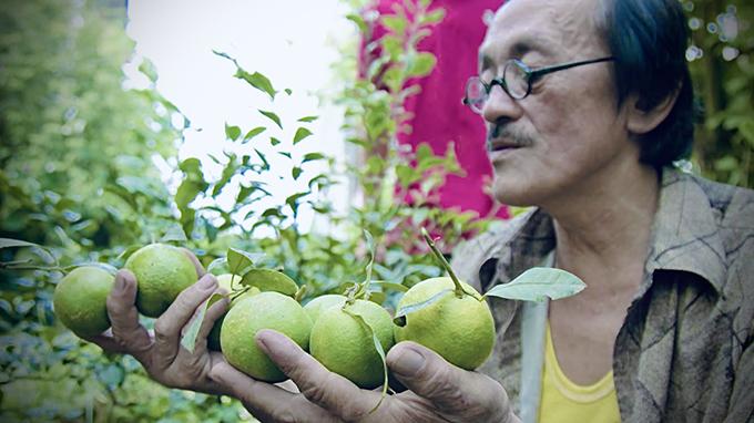 Nam nghệ sĩ tự trồng được cây chanh quả mọng trong chậu. Vì đam mê trồng trọt, nghệ sĩ Giang Còi đã học hỏi rất nhiều kinh nghiệm làm vườn từ các lão nông dân tri điền, bắt đầu làm vườn từ những năm 2000.