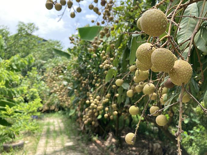 Trong vườn có các loại cây ăn trái lâu năm gồm nhãn, xoài, ổi, na, mít. Rau trái ngắn ngày có rau muống, cải, bí, mướp, dưa leo, dưa lưới, dưa lê... Ngoài ra còn một số vị thuốc, cây gia vị mà Giang Còi sưu tập qua năm tháng như: mắc khén, dổi, mắc mật, xạ đen, mật gấu.
