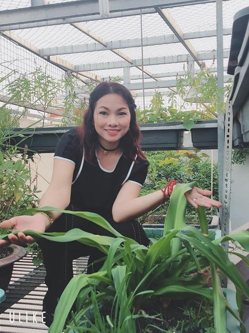 Trong khoảng 1 năm trở lại đây, chị gái của diễn viên, cựu người mẫu Anh Thư là chị Nguyễn Quỳnh Hương, (43 tuổi, nội trợ, quận Bình Tân, TP HCM) đã tự gây dựng cho mình một mảnh vườn đa dạng diện tích 80 m2 ở gác mái trên khoảng sân trống sau nhà.