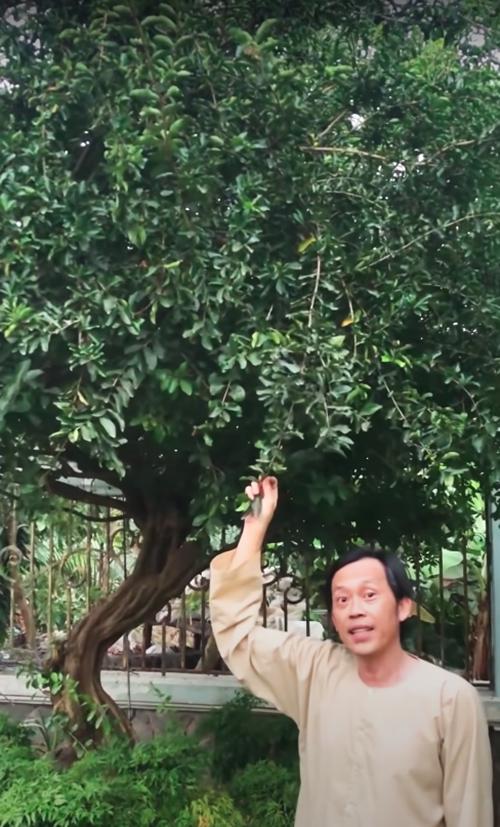 Anh tiết lộ nhà còn trồng cherry Việt Nam, tức cây sơ ri nhưng đã hết sạch trái.