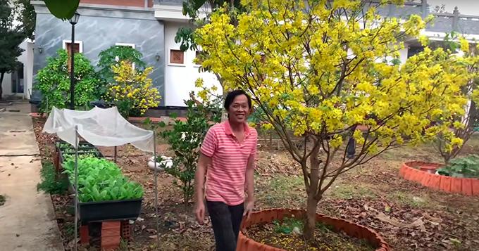 Cây mai nở hoa rực rỡ ngày mùng 1 Tết năm nay của danh hài. Phía bên cạnh là những luống rau cải nhà trồng.