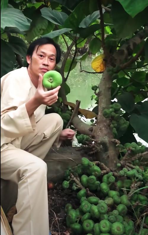 Nghệ sĩ Hoài Linh khoe trái vả to bằng nắm tay người lớn.