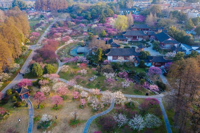 Cách đây tròn một năm, Vũ Hán là tâm điểm của cả thế giới khi là nơi đầu tiên bùng phát dịch bệnh Covid-19. Nhưng trước dịch bệnh, với người Trung Quốc, Vũ Hán được biết đến là thủ đô của hoa anh đào vào mùa xuân bởi nhiều điểm ngắm hoa đẹp nhất cả nước. Nổi bật nhất là Hồ Đông - một trong những hồ đô thị lớn nhất ở Trung Quốc với diện tích 80 km2.